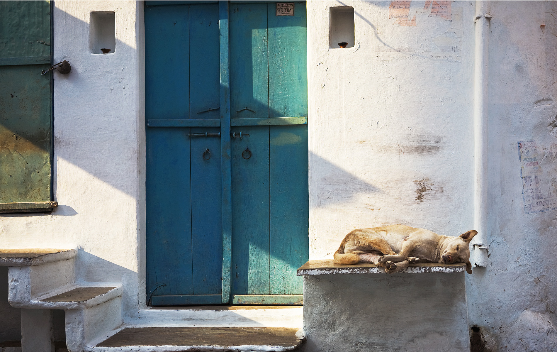 The Dog & the Turquoise Door